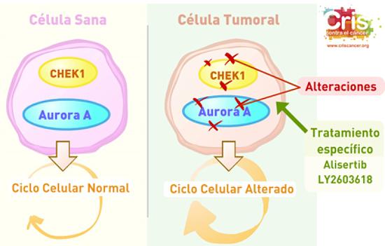 Proyecto cáncer de Ovario Fundación CRIS