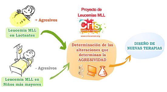 Leucemia MLL. Sant Joan de Deu, Barcelona