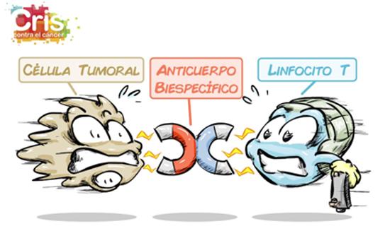 Unidad CRIS inmuno-oncología. Inmunoingenieria